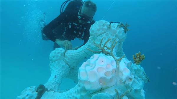 خدمات پرینت سه بعدی به کمک بزرگترین صخره دریایی چاپ شده در مالدیو 2